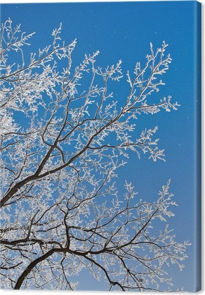 Obraz na plátně Krajina s jinovatkou, mráz a sníh na stromě v zimě. - Roční období