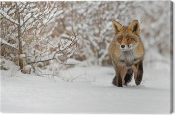 1013832d0e Obraz na plátně Fox v lese na Vysoké Tatry
