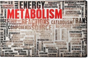 metabolismus definition