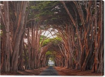 Obraz na plátně Ohromující cypřišový tunel v místě reyes národní pobřeží, california, spojené státy. stromy zbarvené červeným světlem zapadajícího slunce.