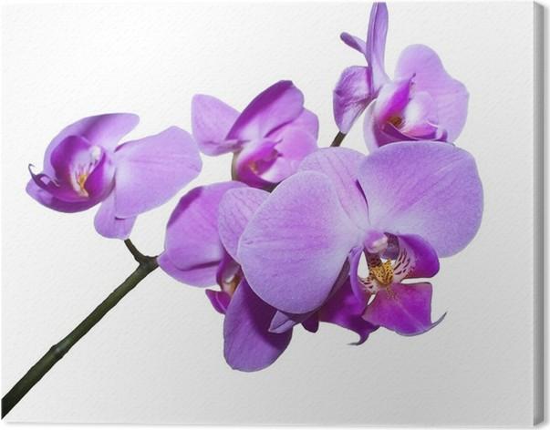 Obraz na plátně Orchid větev - Nálepka na stěny