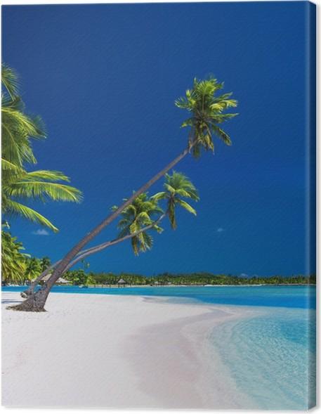 Obraz na plátně Palmy visí nad lagunou s modrou oblohou - Palmy