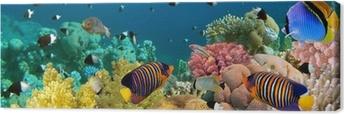 Obraz na Plátně Podvodní panorama s Angelem ryb, korálové útesy a ryby. Červený