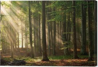 Obraz na plátně Podzimu lesních dřevin. příroda zelená dřevo slunečnímu záření pozadí.