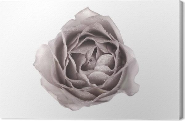 Obraz na plátně Růže - Témata