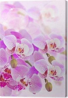 Obraz na plátně Růžová orchidej větev zblízka