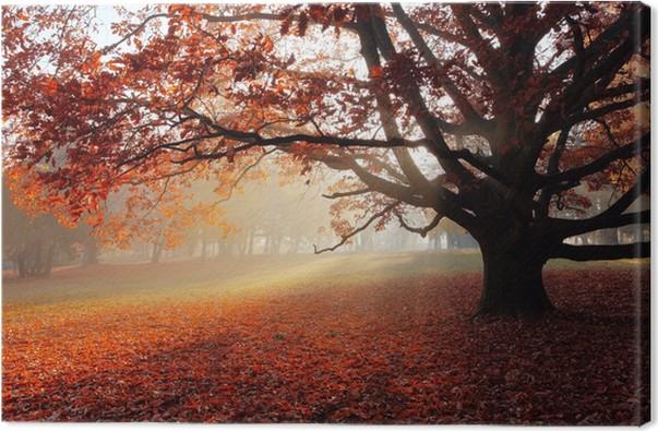 Obraz na plátně Sám strom na podzim parku. - Témata