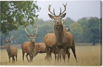 Obraz na plátně Stádo Red Deer jeleny a to na podzim podzim louku