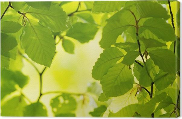 Obraz na plátně Zelené listy na jaře - Témata