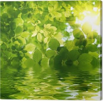 Obraz na plátně Zelené listy s Sun Ray