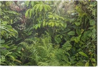 Obraz na plátně Zelený tropický deštný prales pozadí