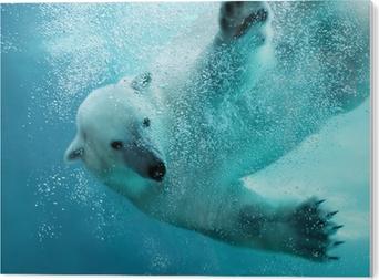 Obraz na Pleksi Atak niedźwiedzia polarnego pod wodą