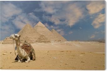 Obraz na Pleksi Wielbłąd piramidy