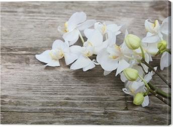 Obraz na płótnie Biała orchidea phalaenopsis