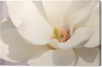 Obraz na płótnie Białe kwiaty magnolii