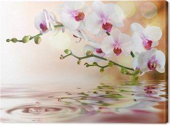 Obraz na płótnie Biały orchidee na wody z kropli