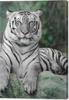 Obraz na płótnie Biały tygrys na skale w zoo