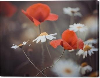 Obraz na płótnie Czerwone kwiaty maku i dzikich stokrotek