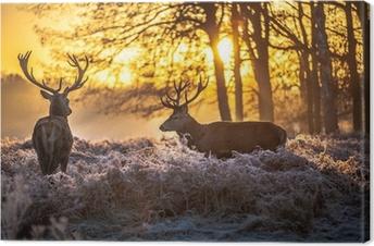 Obraz na płótnie Czerwony jeleń