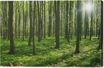 Obraz na płótnie Drzew leśnych. zieleni drewno światło słoneczne tła.