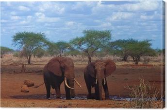 Obraz na płótnie Dwa słonie, pić, w otoczeniu czerwonej ziemi (Kenia)