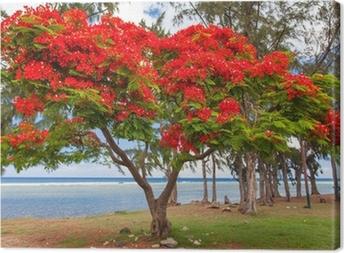 Obraz na płótnie Ekstrawagancki Drzewo, Saint-Leu, Reunion