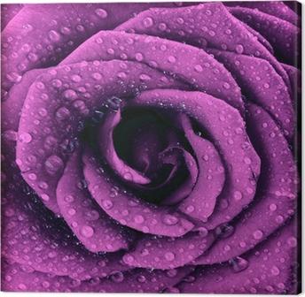 Obraz na płótnie Fioletowy ciemny wzrosła w tle