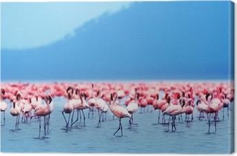 Obraz na płótnie Flamingi afrykańskie