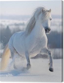 Obraz na płótnie Galopujący koń biały