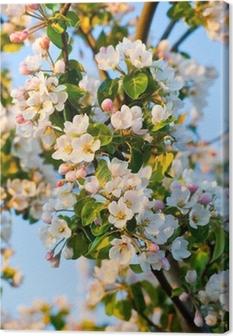 Obraz na płótnie Jabłoń kwiat