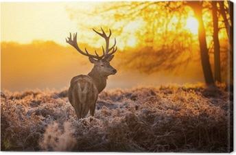Obraz na płótnie Jeleń szlachetny w porannym słońcu