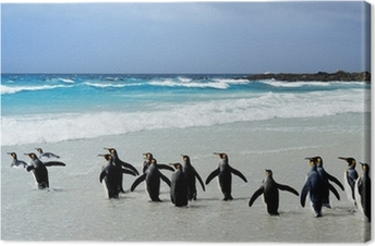 Obraz na płótnie King Penguins