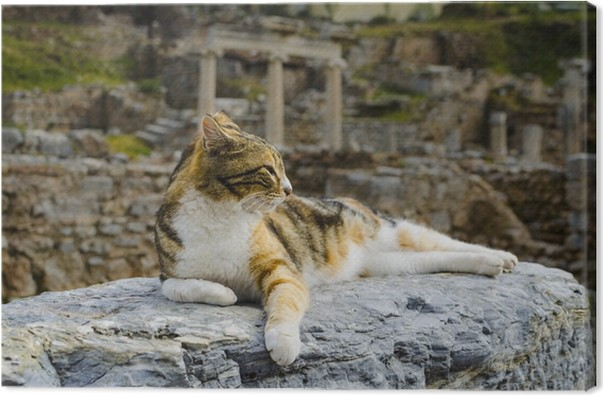Obraz Na Płótnie Kot Leży Na Gruzach Pixers żyjemy By Zmieniać