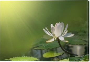 Obraz na płótnie Kwiat lilii na zielonym tle