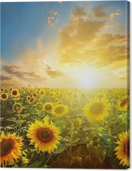 Obraz na płótnie Letni krajobraz: sunset piękno nad polem słoneczniki