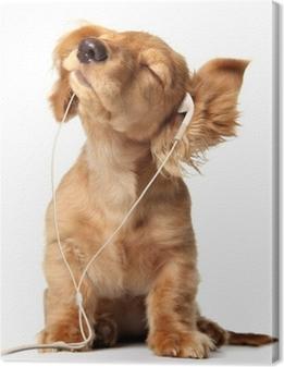 Obraz na płótnie Młody szczeniak słuchania muzyki na zestawie głowicy.