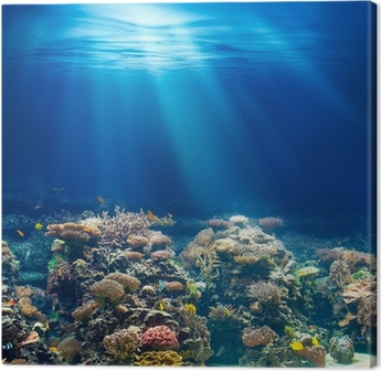 Obraz na płótnie Morskiego lub oceanu podwodna rafa koralowa z rurką lub akwalungiem backgrou