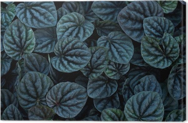 Obraz na płótnie Niezwykłe piękne ciemne czarne pozostawia tekstury na tle dodać filtr koloru - Hygge