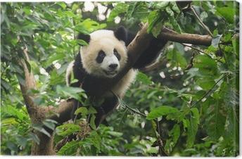 Obraz na płótnie Panda wspinaczki drzewo