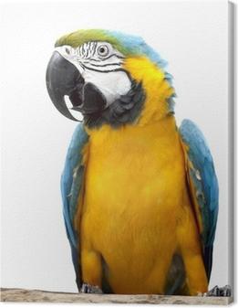 Obraz na płótnie Papuga ara