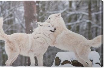 Obraz na płótnie Para Wilk