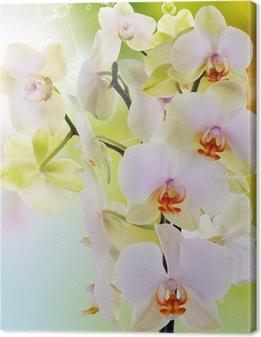 Obraz na płótnie Piękne kwiaty japońskie Orchid.Beauty.Flora
