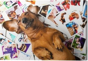 Obraz na płótnie Pies wśród zdjęć