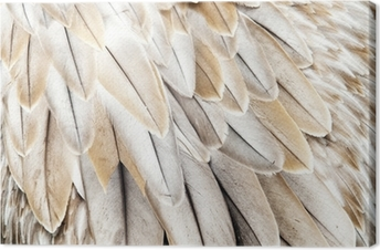 Obraz na płótnie Piora ptasie