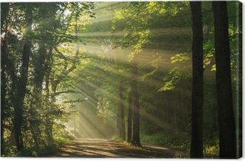 Obraz na Płótnie Promienie słońca przecinające las