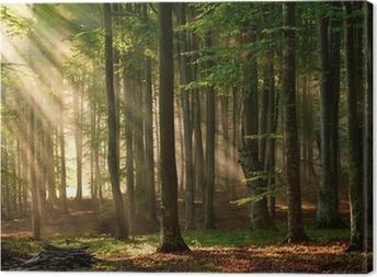 Obraz na płótnie Promyki słońca przebijają się przez las