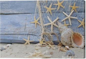 Obraz na płótnie Przypomnienie wakacje: ślimak Ramshorn, rozgwiazdy i sieci rybackich
