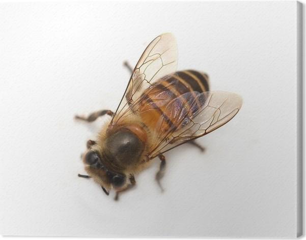 Obraz Na Płótnie Pszczoła