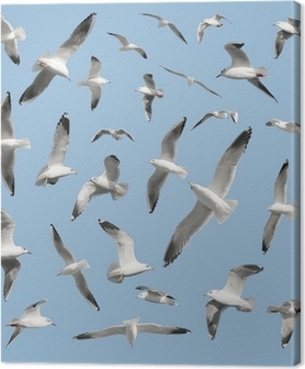 Obraz na płótnie Ptak na niebie