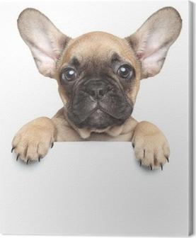 Obraz na płótnie Puppy na białym sztandarem
